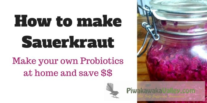 Not only is home made sauerkraut delicious, it is an amazing probiotic - each spoonful contains more probiotics than a whole bottle of the ones you buy at the store!