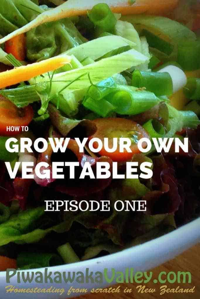 Want to be more self sufficient, but don't know how? Here is the ultimate series for Starting a Vegetable Garden.