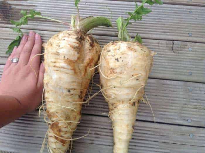 grow your own vege garden. Homesteadning in nz, vegetable