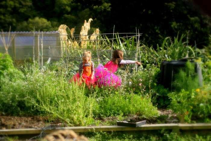 grow your own vege garden. Homesteadning in nz