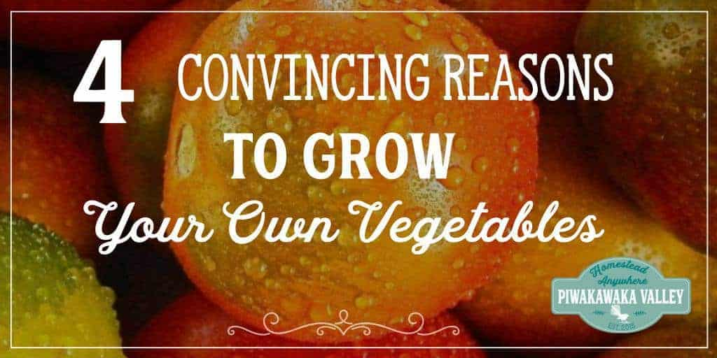 Growing a vegetable garden is the first step in self sufficiency, food security and knowing where you food comes from.