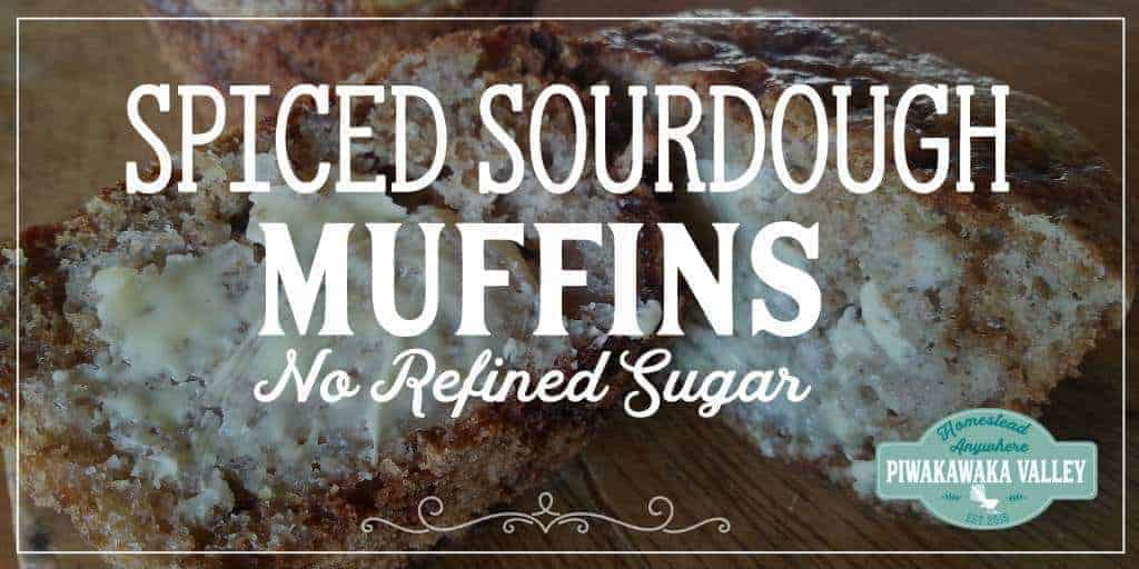 Did you know you can make more than just bread with sourdough? These sourdough muffins have no refined sugar and are really tasty. #recipe #sourdough