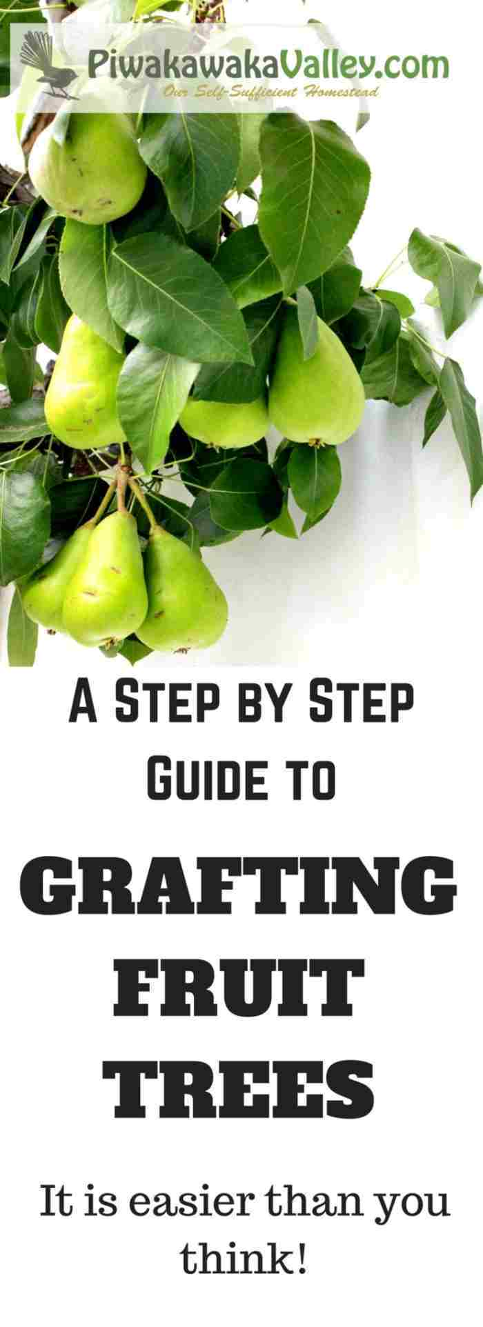 How to Grow Your Own Fruit Trees For Super Cheap | Grafting Fruit Trees