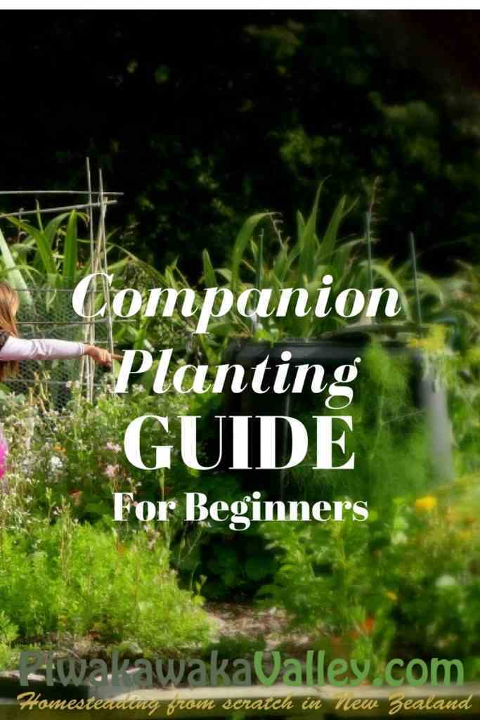 Homesteading in NZ companion planting Guide for beginners, Companion plants