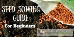 Do you want to grow a garden, but aren't sure where to start? Our seed sowing guide for beginners with give you the tips on tricks you need to sow your own seeds