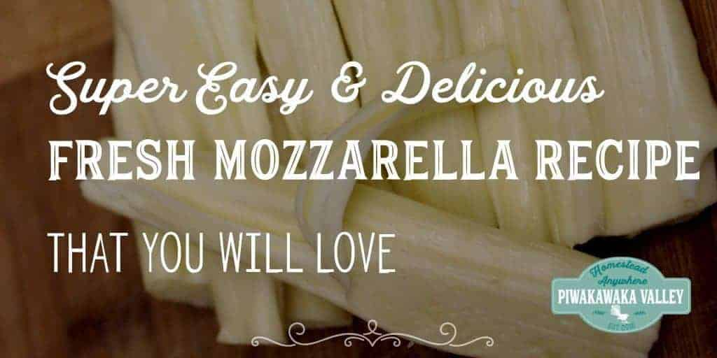 Have you every tried making cheese at home? Here is a delicious and super easy fresh mozzarella cheese recipe with step by step pictures and instructions.