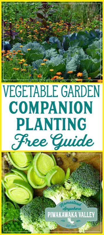 Growing the right combination of plants together increases their yield and reduces disease. companion planting chart for vegetables pdf printable free Use this free companion planting guide for your vegetable garden and watch your plants flourish! #free #gardening #vegetablegarden #companionplanting #homesteading
