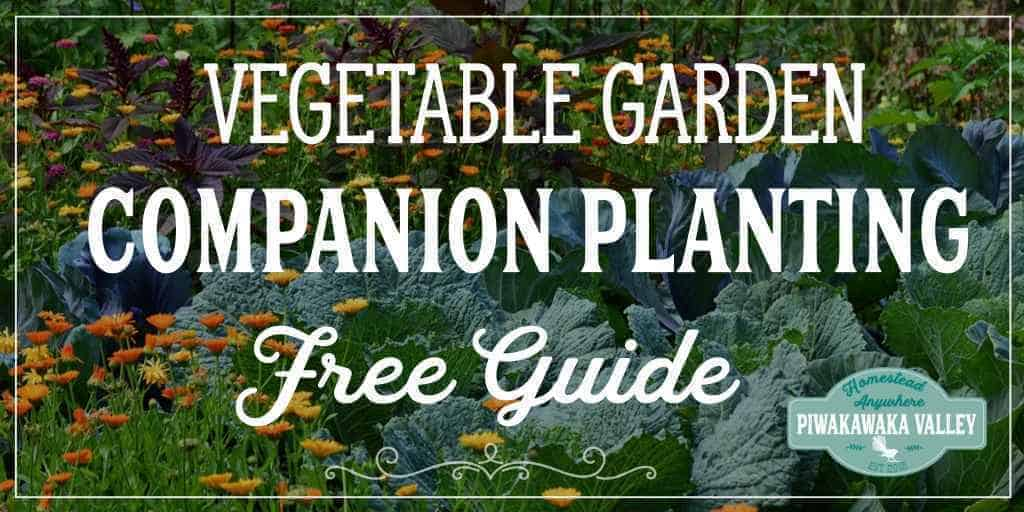Vegetable Garden Companion Planting Chart for vegetables and herbs