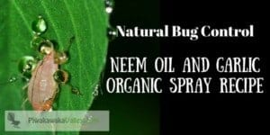 Make your own Effective Pesticide Neem Oil and Garlic Organic Spray Recipe