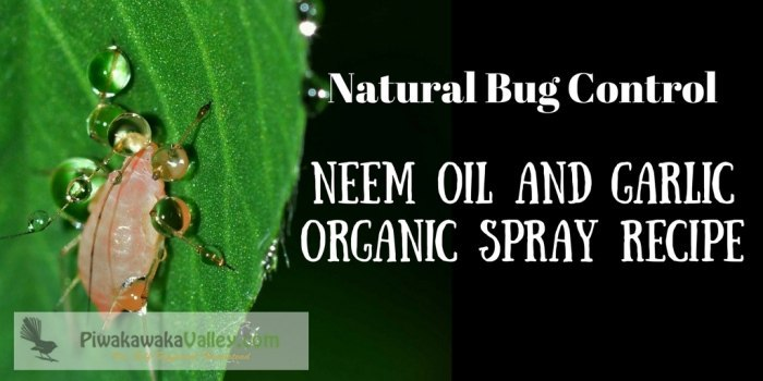 Make your own Effective Pesticide Neem Oil and Garlic Organic Spray Recipe