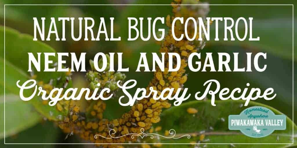 Neem Oil and Garlic Organic Spray Recipe | Natural Bug Control