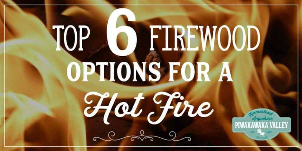 Top 6 Firewood Options For A Hot Fire