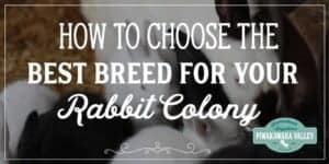 How to choose the best meat rabbit for a colony. Not all rabbits are suited for colony life, here is a guide to choosing the best meat rabbit for your situation.