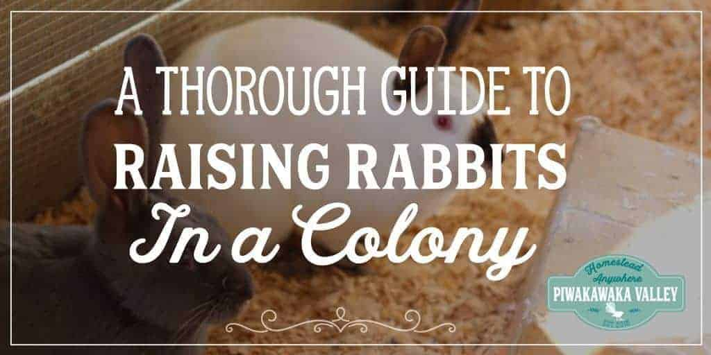 Housing Meat Rabbits in a Colony – Raising Meat Rabbits