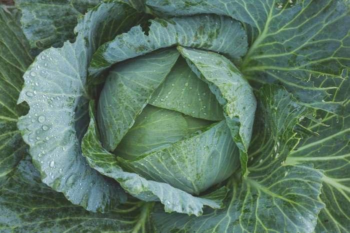 Self Sufficient Garden, Grow a vegetable garden from scratch, food self reliance