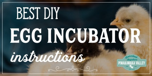 How to Make an Incubator: DIY Egg Incubator Step by Step with Pictures! promo image