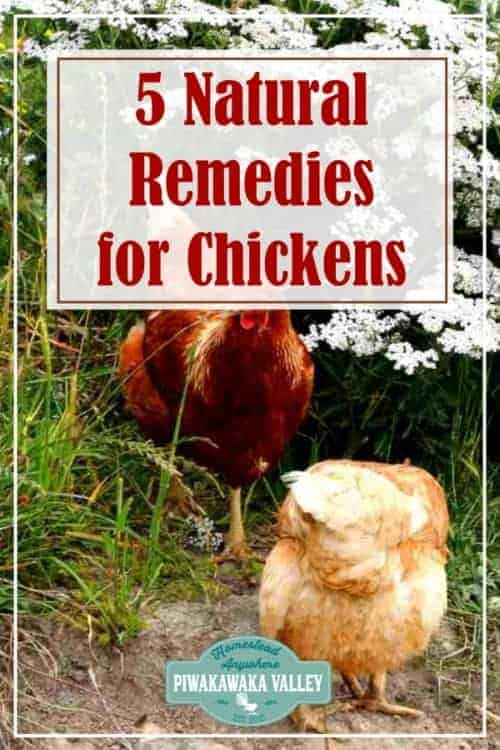 Natural remedies for chickens