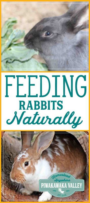 Feeding rabbits without pellets: Natural rabbit food ideas promo image