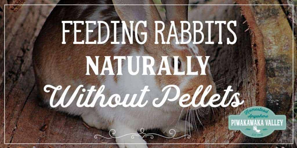 Feeding Rabbits Naturally – Raising Meat Rabbits