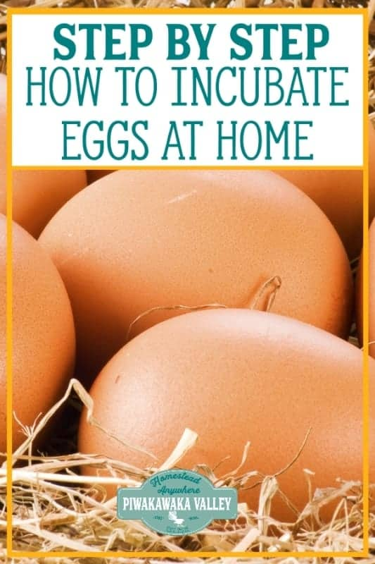 incubate eggs at home
