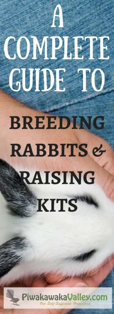 whether you new to rabbits or an old hand, this information on breeding and raising rabbits is helpful. A comprehensive beginners guide to breeding rabbits