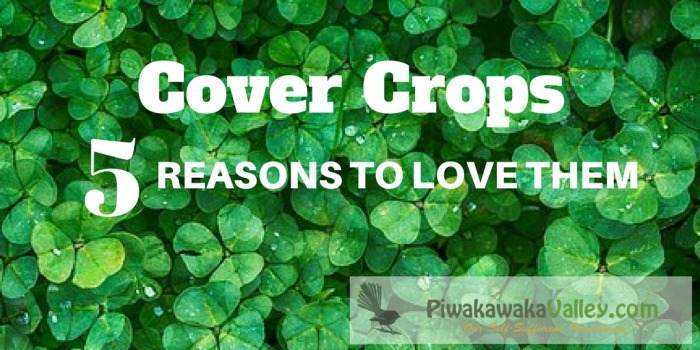 The benefits of cover crops, green manure result in a productive garden