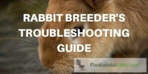 Rabbit troubleshooting guide when breeding rabbits, helpful tips and tricks from a pro.