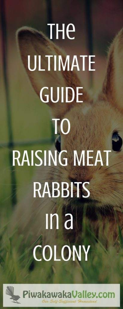 This is a collection of all you need to know about breeding and raising meat rabbits in a colony.