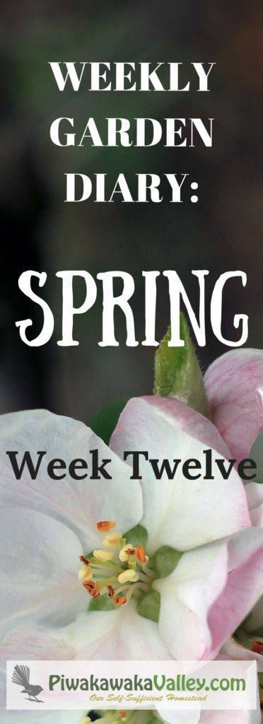 Not sure what you should be doing in the garden this week? We have you covered with our weekly garden series for zone 9 gardens
