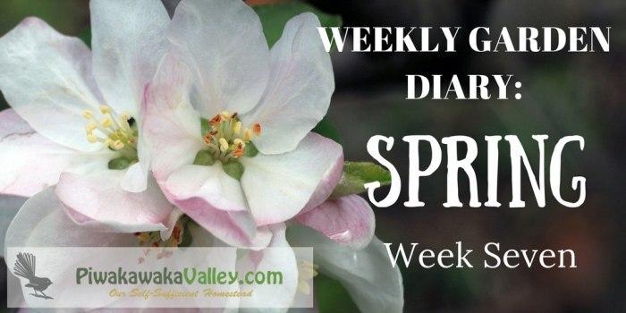 Weekly Garden Diary: Spring Week 7