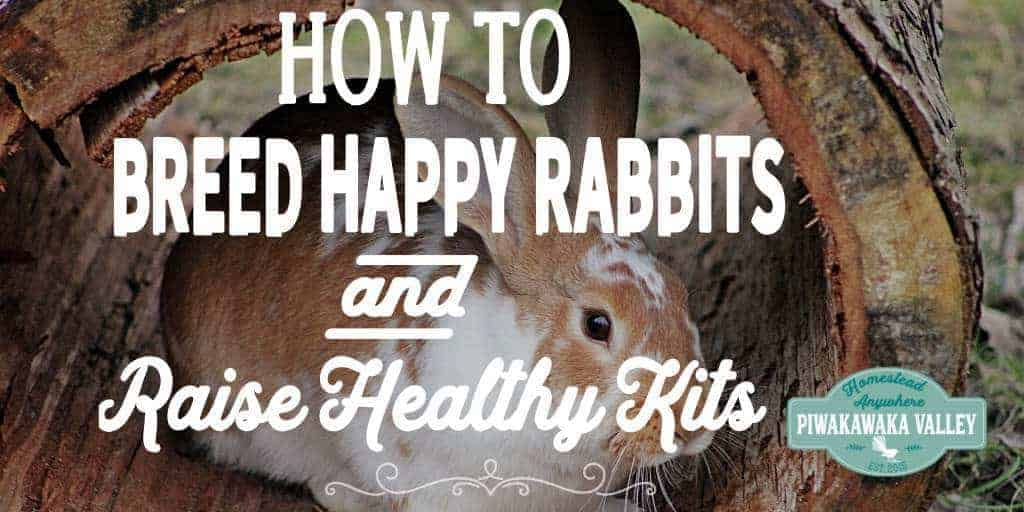 How to Breed Happy Rabbits and Raise Healthy Kits