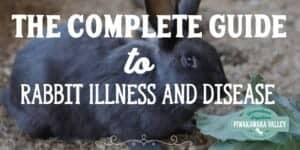 Rabbit Diseases Reference Guide - Raising Meat Rabbits . Rabbit diseases. common ailments, rabbit illness, sick rabbits