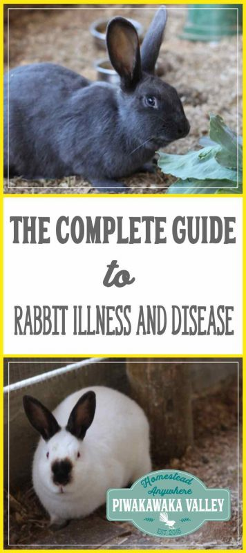 Do you keep rabbits? This Rabbit Diseases Reference Guide covers rabbit illness both common and rare. Pin it for later incase you ever end up with a sick rabbit