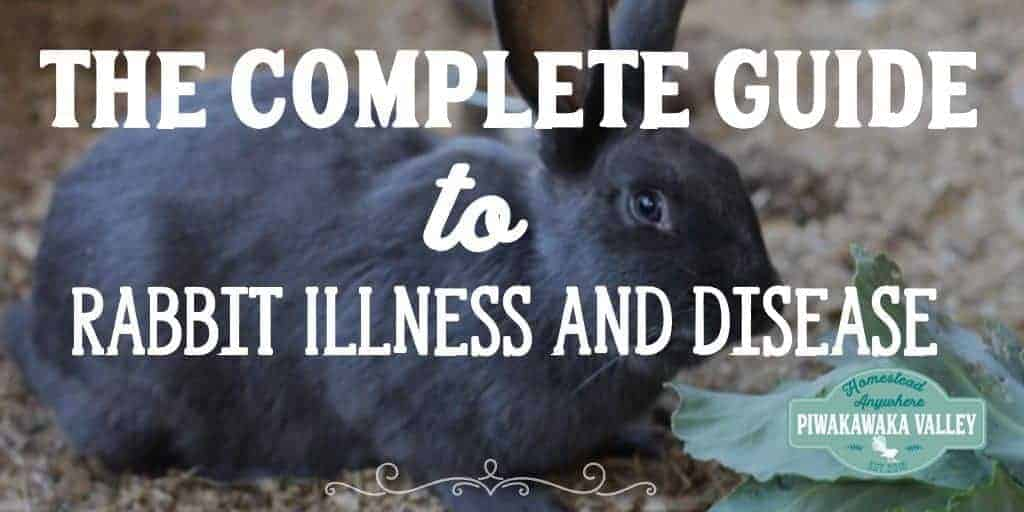 The Complete Guide to Rabbit Illness and Disease