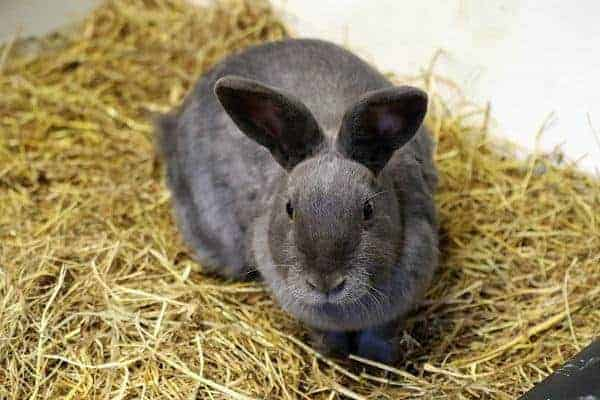 Safe Foods for Feeding Rabbits. Here is a list of healthy safe foods for feeding rabbits naturally. Remember if you cannot correctly identify the plant, don't risk giving it to your bunny!