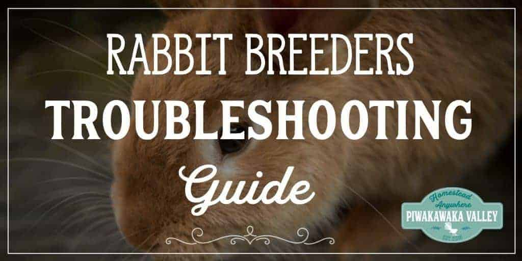 Rabbit troubleshooting guide when breeding rabbits, helpful tips and tricks from a pro. #rabbit #colonyrabbit #breedingrabbits #homesteading