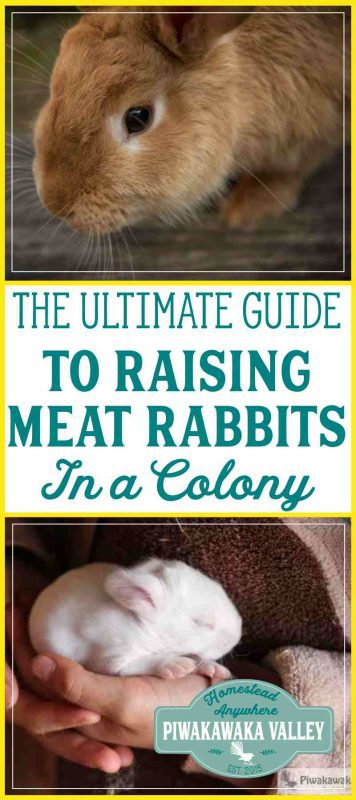 This free resource is the ultimate collection of information regarding raising meat rabbits in a colony. Group housing rabbits is becoming very popular as people become more aware of where their food is coming from, and want to consume humanely raised meat. #free #rabbitcolony #meatrabbits #homesteading