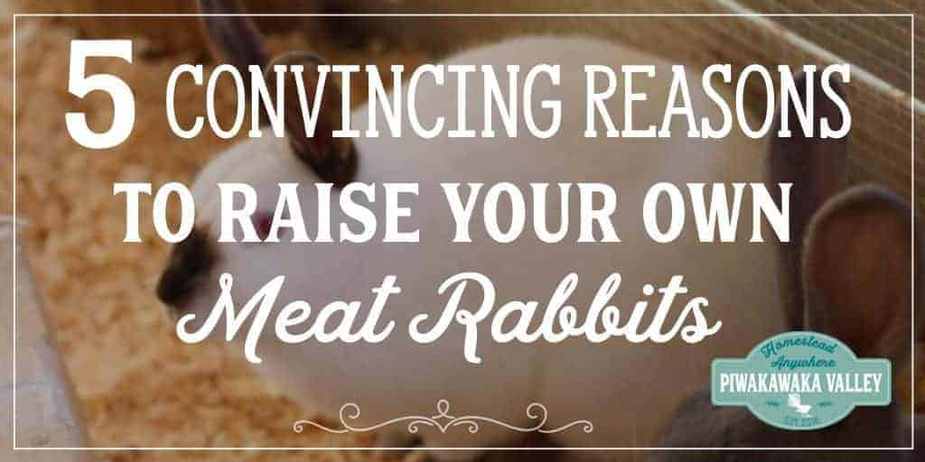 Raising meat rabbits in your backyard is a great way to ensure your family has a reliable, sustainable and healthy source of meat. Here are the top 5 reasons why raising rabbits for meat is a great idea.