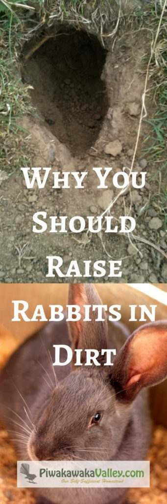 When your rabbits are allowed to live in dirt, they thrive. Find out why!