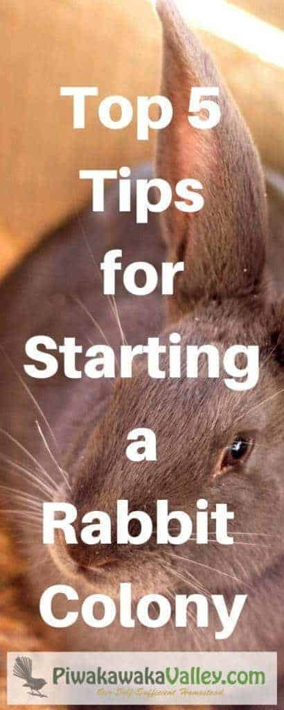 Raising rabbits in a colony is the best way to ensure happy, healthy, natural rabbits