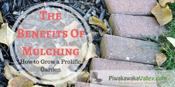 Benefits of Mulching – How to Grow a Prolific Garden