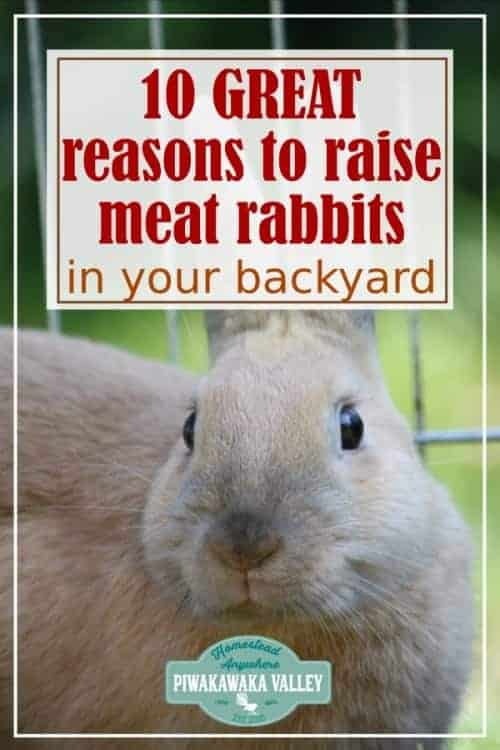 10 Reasons to Raise Backyard Meat Rabbits - A Sustainable Meat Source for the Homestead promo image