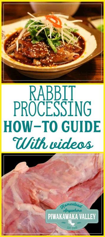 A complete how-to guide on slaughtering, harvesting and processing rabbits. With Videos. #meatrabbits #colonyrabbits #homesteading