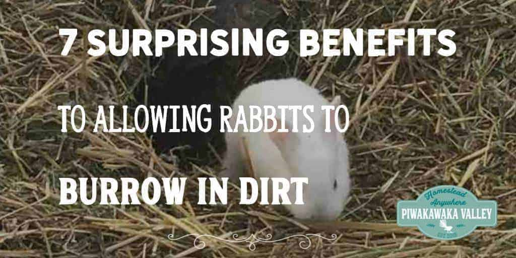 colony rabbits do best in dirt, meat rabbits enjoy being able to live the natural way