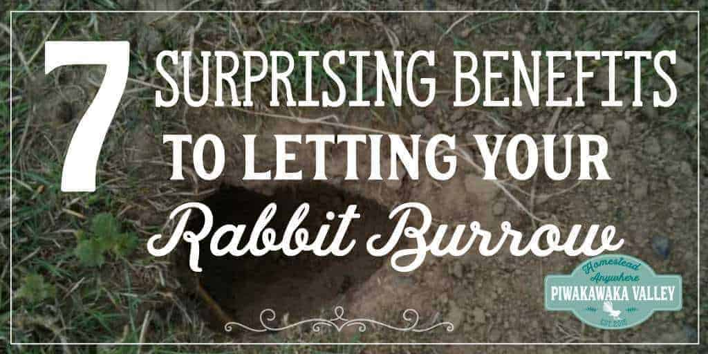 7 Surprising Benefits to Allowing Rabbits to Burrow in Dirt