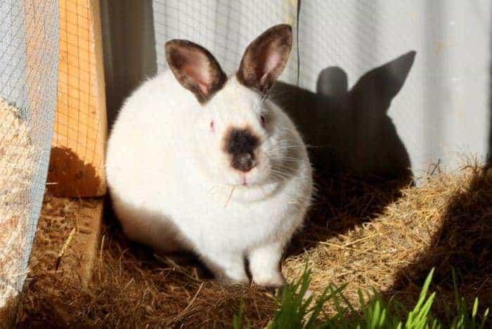 rabbit colony