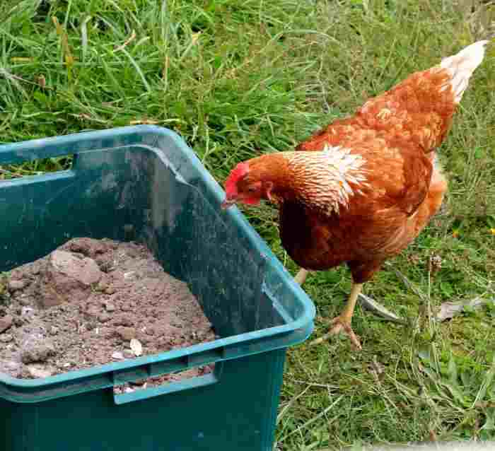 Natural Way To Kill Lice On Chickens