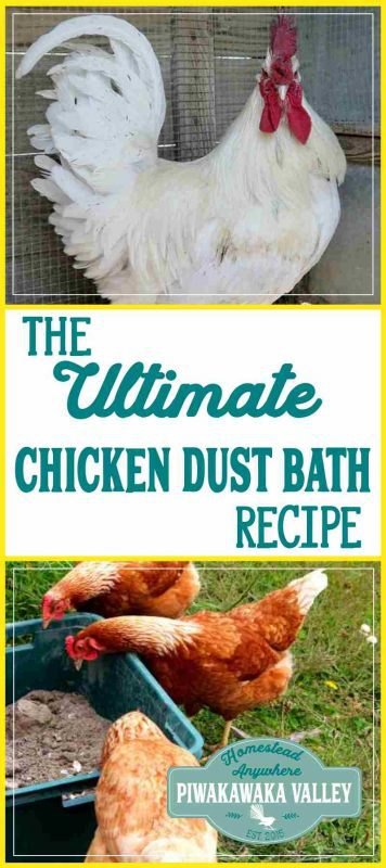 Did you know chickens love a dust bath? You can make this easy chicken dust bath recipe at home. They use it to naturally repel fleas, mites, ticks and lice. This is our own recipe for the Ultimate Chicken Dust Bath