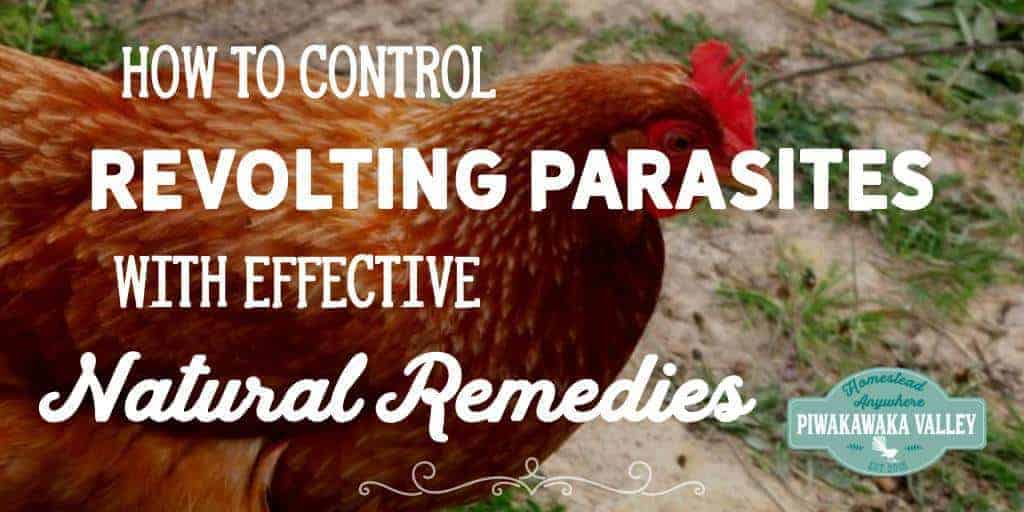How to Control Revolting Parasites With Effective Natural Remedies