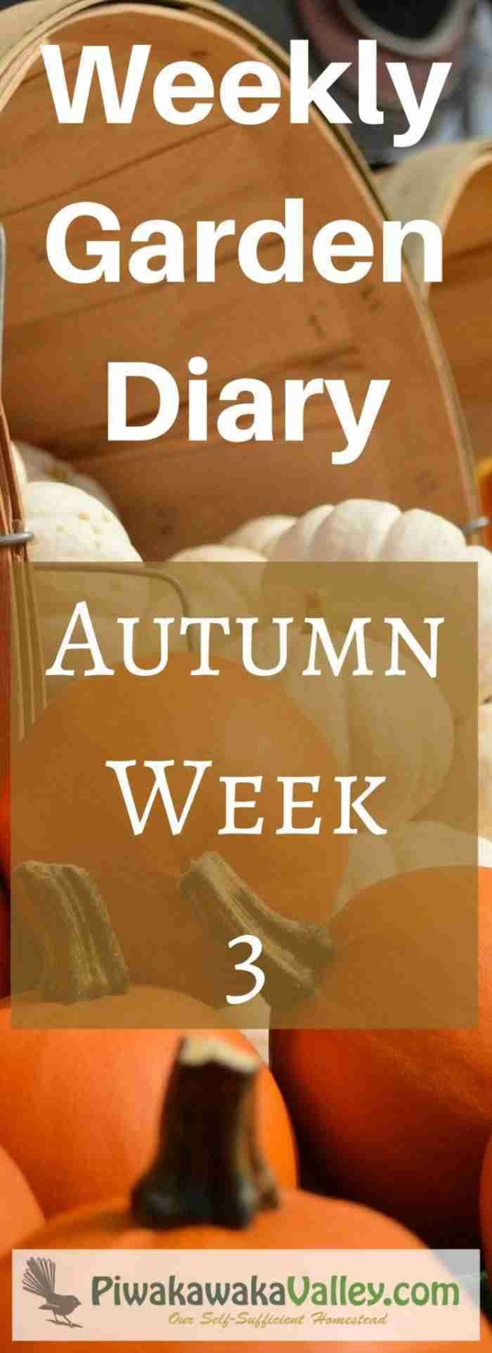 zone 9 weekly garden diary for autumn / fall week 3